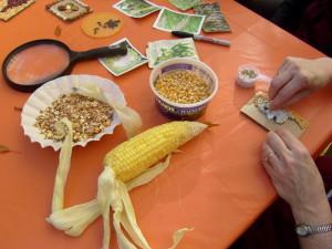 Seed Study and Mosaics