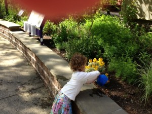 A child waters plants